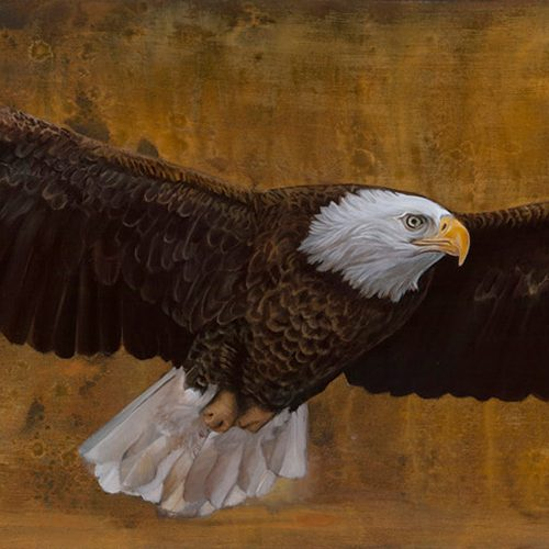 american freedom eagle by sharon brening