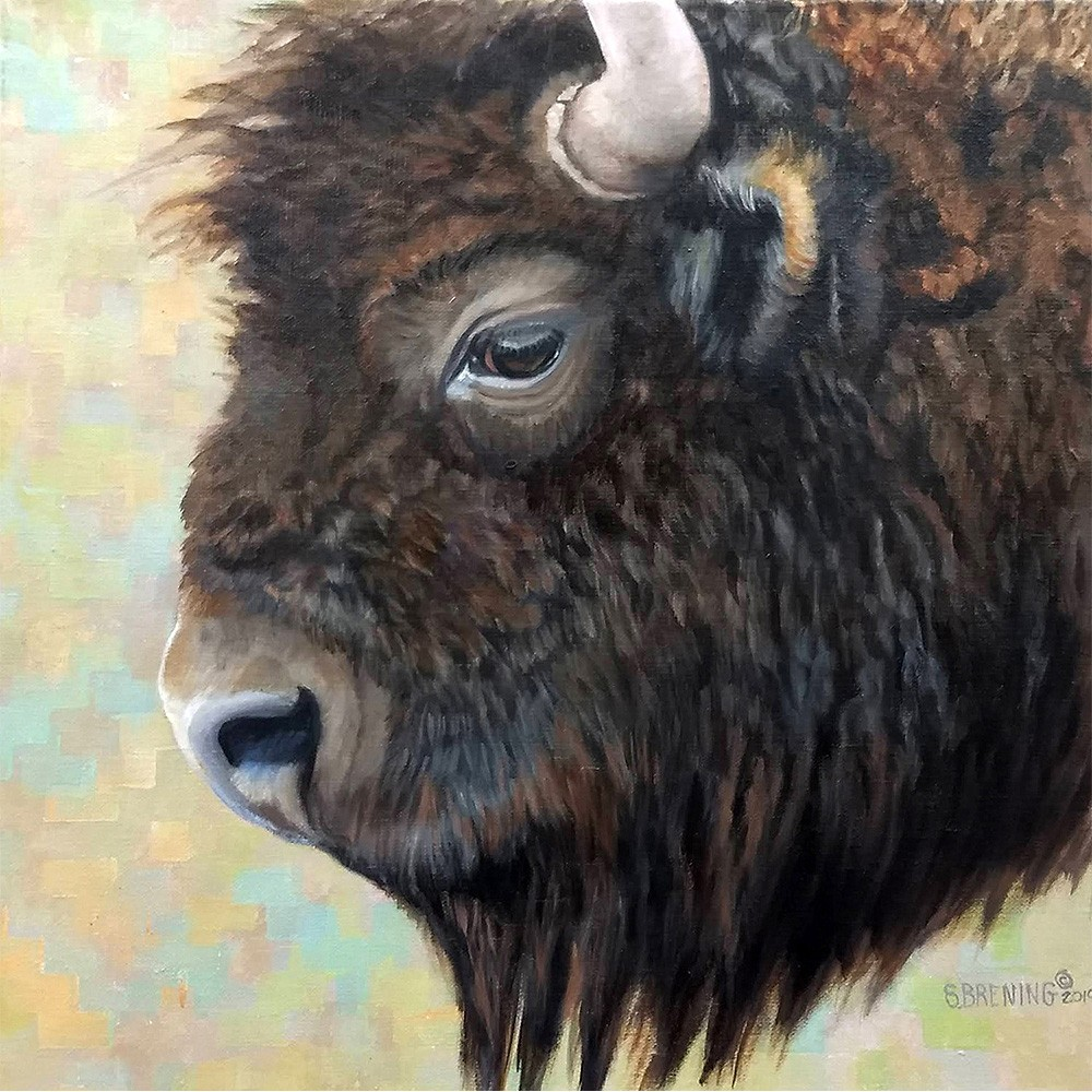 bison by sharon brening
