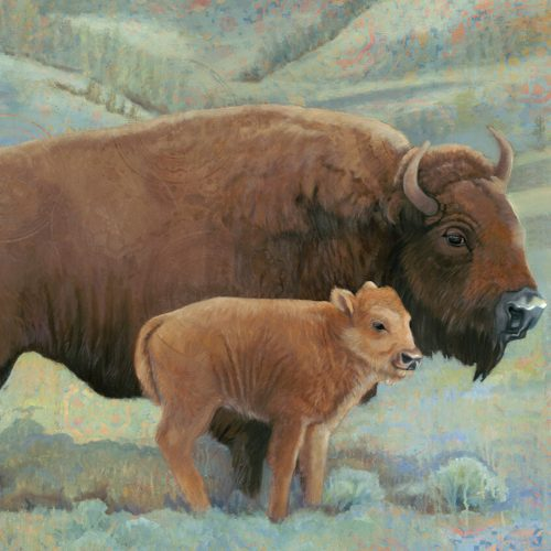 buffalo roam by sharon brening
