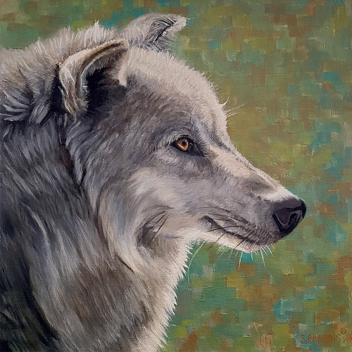 gray wolf by sharon brening